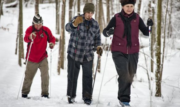 Springwater Forest Cross Country Skiing