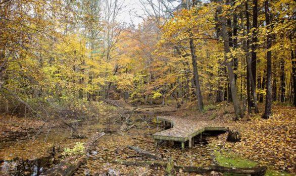 Springwater Forest Education Platform