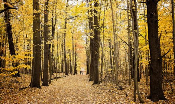 Springwater Forest Trail in Fall