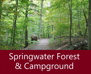Springwater Forest & Campground